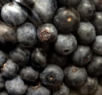The blueberries